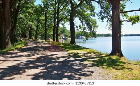 A hiking and bicycle trail under the trees along the Dvoriste pond near Trebon city in South Bohemia, Czech Republic. Sun is shining on hiking trail under the trees.