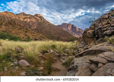 Hiking in the Brandberg massif to see bushmen rock paintings.  Damaraland (Erongo), Namib Desert, Namibia