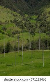 Hiking in the Cocora Valley in Colombia, South America