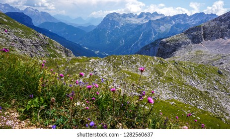 Hiking from Cortina d'Ampezzo to Lake Sorapis. Flowering mountain herbs in the first plan and mountains on the second plan - Dolomite Alps, Belluno,Veneto, Italy
