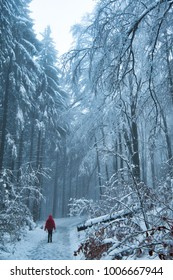 Hiking in difficulty snowy terrain in a cold winter day. On a winter trail in a middle of frosty forest. Female hiker in a red jacket.