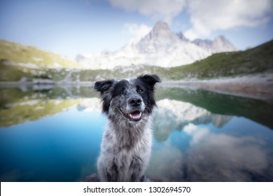 Hiking with dogs. Dog in the Dolomite mountains at a lake. Healthy lifestyle. Adventures with dogs.