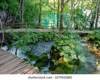 Hiking footbridge forest River Lake jungel