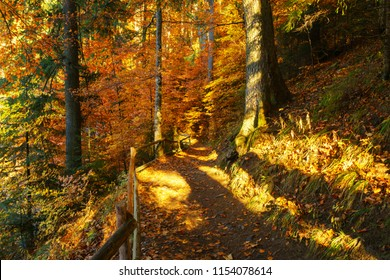 Hiking footpath covered with fallen autumn leaves in autumn fall forest.