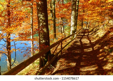 Hiking footpath covered with fallen autumn leaves near the blue lake.