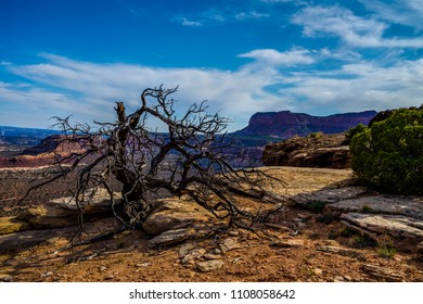 Hiking to the Golden Stairs Viewpoint in the Maze area of the Canyonlands National Park in Utah, brought me to some really intriguing dead and twisted tree trunks.