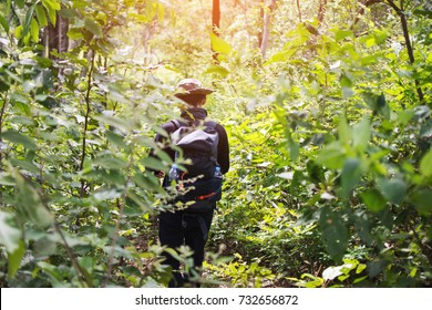 hiking man in the forest at sunny day. subject is blurred.