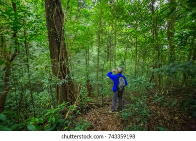 hiking man standing in rain forest