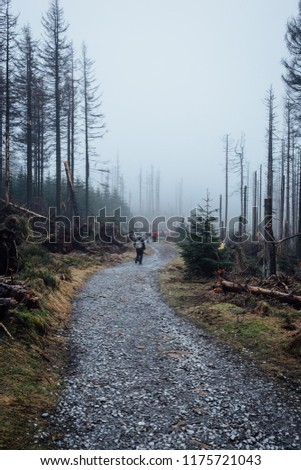 Hiking in the misty forests