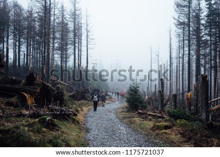 Hiking in the misty forests in the Harz mountains