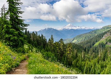 Hiking at Mount Baker in peak wildflower season with lupine and other wildflowers blooming