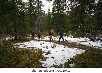 Hiking in the mountains in winter. Backpackers walking on snow-covered mountain slope. Complicated weather conditions. A group of tourists and dog on a winter walk in the winter forest path