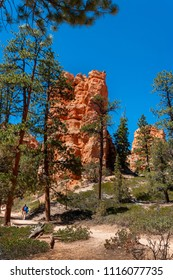 Hiking the Navajo and Queens Garden Trail in Bryce Canyon National Park. Navajo Loop and Queens Garden Trail is a 2.6 mile heavily trafficked loop trail located near Bryce Utah.