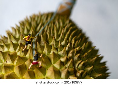 Hiking on a durian fruit concept