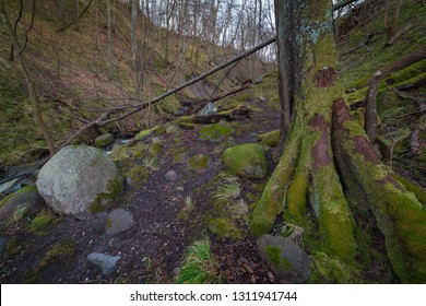 Hiking path along the fast forest stream.