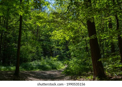 """A hiking path in the """"Dresdner Heide"""". The Dresden Heath is a large forest in the city and an important recreation area."""