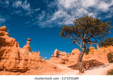 Hiking path and hoodoos as well as isolated tree in Bryce Canyon National Park, Utah, USA