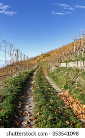 Hiking path leading through vineyard landscape on a sunny autumn day, grounds covered with leaves, blue sky