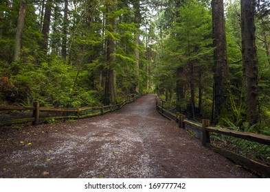Hiking path leads through beautiful green old growth forest.