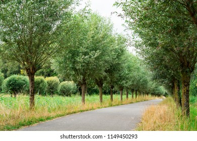 hiking path in National Park Biesbosch, Merwelanden, Dordrecht, The Netherlands