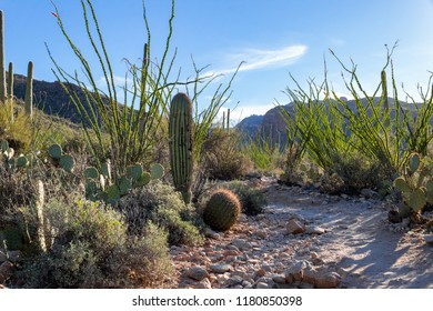 A hiking path or running trail in the beautiful Sonoran desert in Tucson, Arizona. Pima Canyon trail features saguaro cacti, barrel, cholla and prickly pear cactus along with ocotillo and mountains.