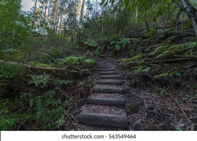 Hiking path in tropical forest. Wooden stairs on Grand Canyon walking track. Blackheath, Australia