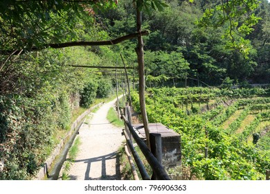 Hiking path and Vineyard panorama in Merano, South Tyrol