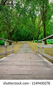hiking path with wooden bridge, in National Park Biesbosch, Merwelanden, Dordrecht, The Netherlands