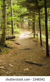 A hiking path in the woods at Wolf's Neck State Park in Freeport, Maine.