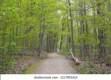 Hiking pathway in Collingwood, Ontario, Canada