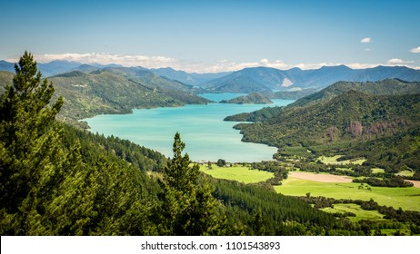 hiking queen charlotte track in marlborough sounds, south island of new zealand, spring