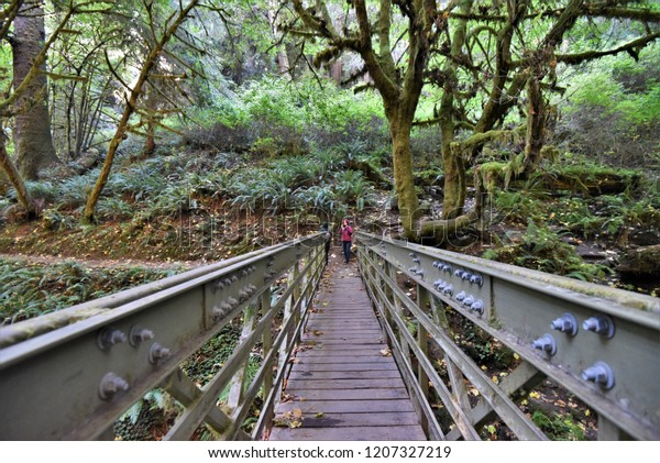 Hiking in Redwood National Forest