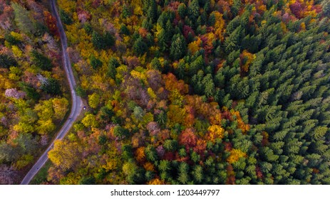 hiking road and colorful fores on autumn day