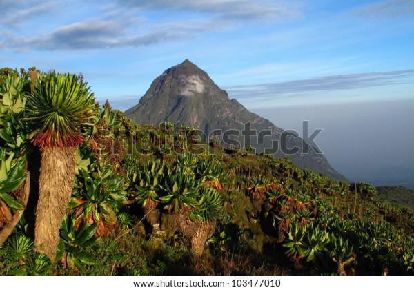 Hiking in Rwanda - Mikeno volcano - D. R. Congo
