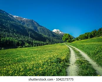 Hiking in swiss national park near zernez in switzerland in may