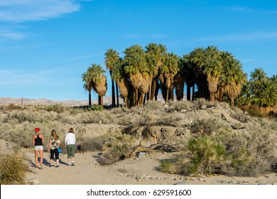 Hiking in Thousand Palms Oasis Preserve in the Coachella Valley Preserve, Palm Springs