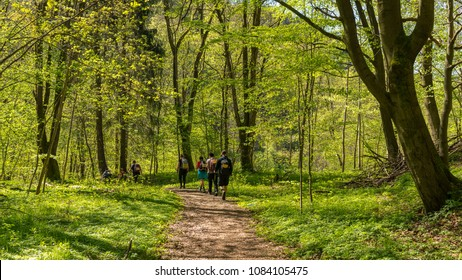 Hiking through a forest