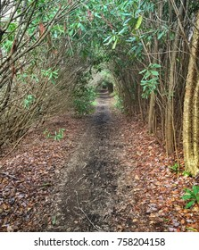 Hiking through the green tunnel
