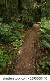 Hiking track in Bosque Nuboso NP near Santa Elena in Costa Rica