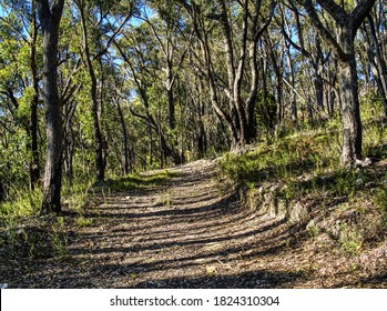 Hiking track of Carro Track in the Cleland Conservation Park in Mount Lofty in Adelaide Hill