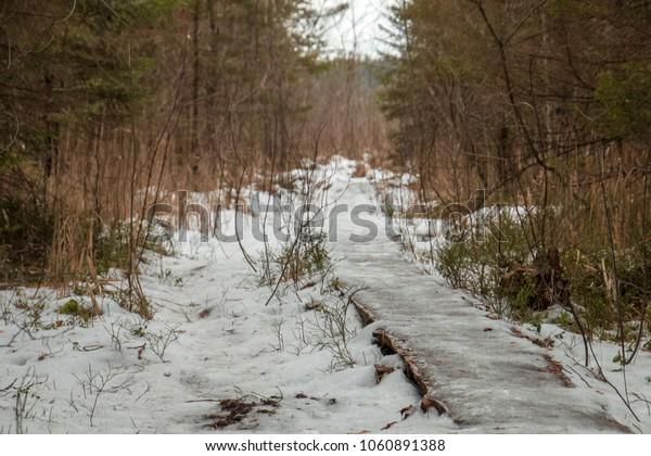 Valgejärve Hiking Trail