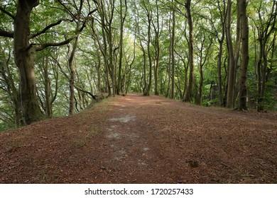 Wanderweg entlang eines Buchenwaldes in der Nähe der Küste.