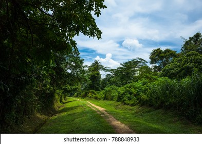 Hiking trail along the old railway tracks in Singapore Bukit Timah Nature Reserve
