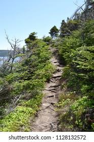 hiking trail along the shoreline of the Atlantic ocean, East Coast trail Silver Mine Head Path near Torbay NL Canada