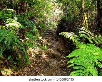 hiking trail in Anaga natural reservation, Tenerife