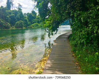 Hiking trail around Macritchie reservoir park with beautiful green water in Singapore