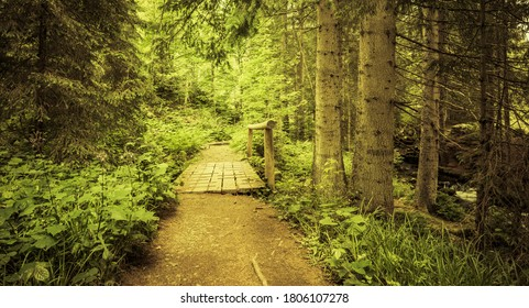Hiking trail in the Bavarian Forest