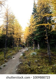 Hiking trail with beautiful weather in Canmore, Alberta, Canada