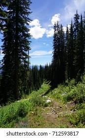 Hiking trail in bright summer sun through trees