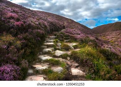 Hiking trail in Cairngorms National Park. Route to Clachnaben in Glen Dye, Aberdeenshire, Scotland